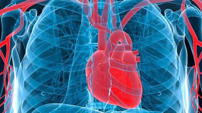 Slováci ukázali základy novej liečby srdca